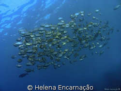 Free.